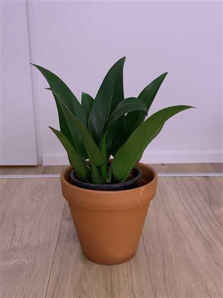 Groen in Huis | Stephanie Keijzer Philodendron Fatboy Review