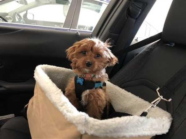 Alpha Paw Dog Car Safety Seat Review
