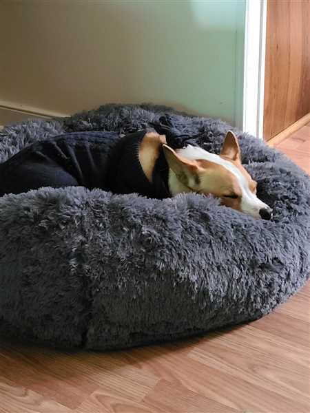 Vicki Brown verified customer review of Cozy Calming Bed for Dogs