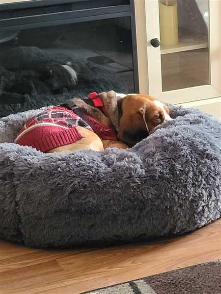 Alpha Paw Cozy Calming Bed for Dogs Review