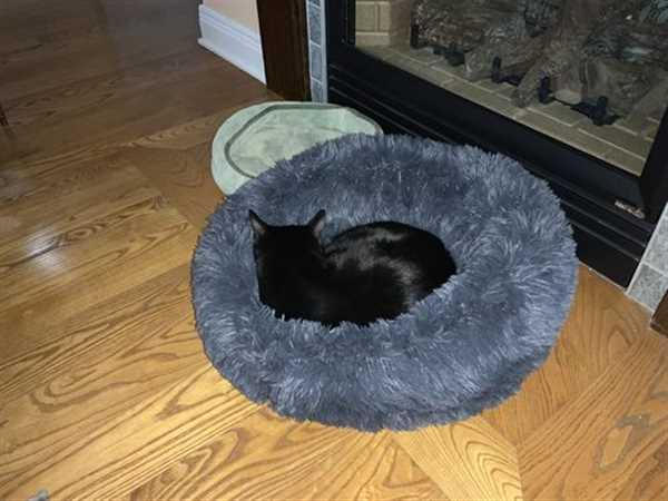 Alpha Paw Cozy Calming Bed for Cats Review