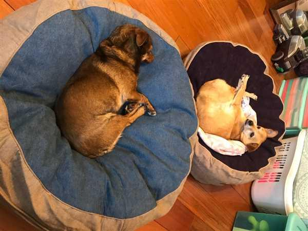 Lisa Wong verified customer review of Forever Pet Beds