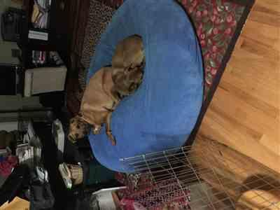 Anonymous verified customer review of Forever Pet Beds
