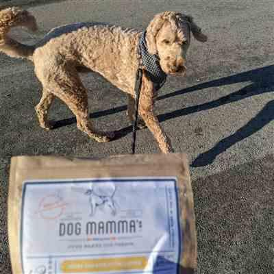 @baxter_goldendoodle_malone verified customer review of Berry Banana Coco Chunk Organic Dog Treats  - 8 oz