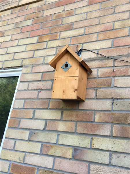 Caroline Watts verified customer review of Complete DIY Wireless Bird Box Camera Kit