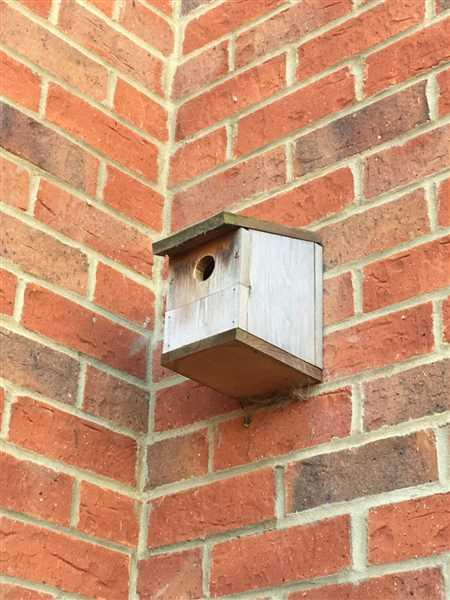 Toby Harfield verified customer review of UK Power Supply for Wireless Bird Box Camera