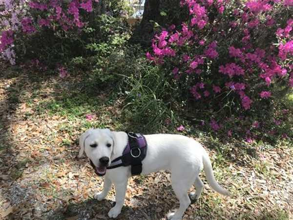 Joyride Harness Heavy Duty Dog Leash Review