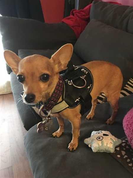 Heidi S. verified customer review of Discount Harness