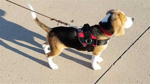 Gayle C. verified customer review of Discount Harness