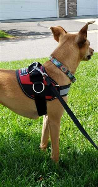 Taara A. verified customer review of Discount Harness
