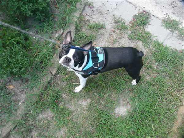 William K. verified customer review of Discount Harness