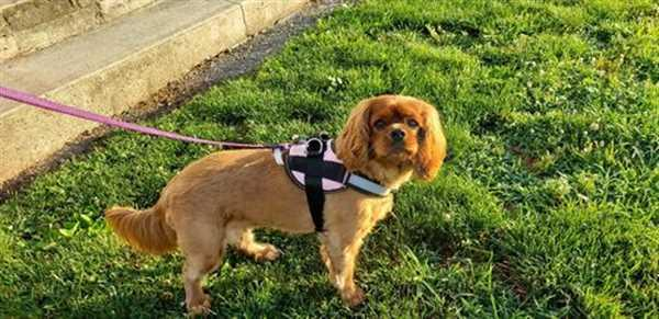Traci S. verified customer review of Discount Harness