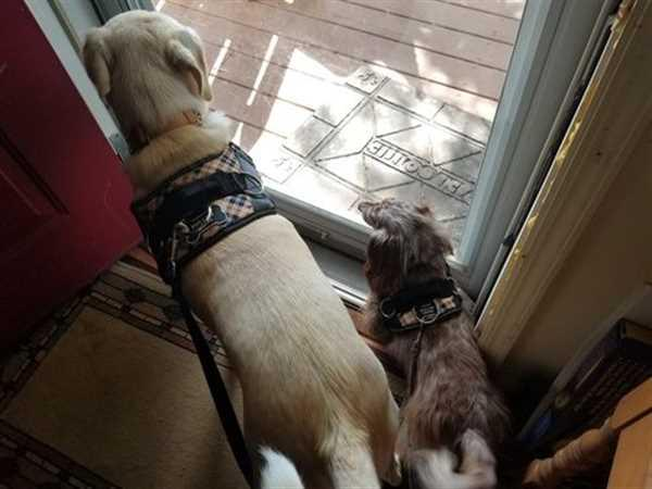 Diane Z. verified customer review of Discount Harness
