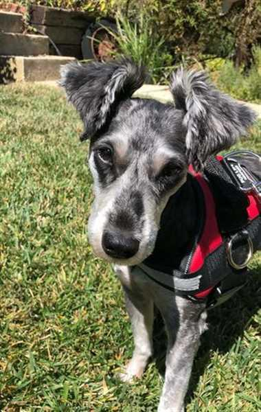 Daniel H. verified customer review of Discount Harness