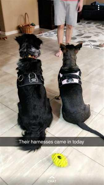 Caeleigh K. verified customer review of Discount Harness