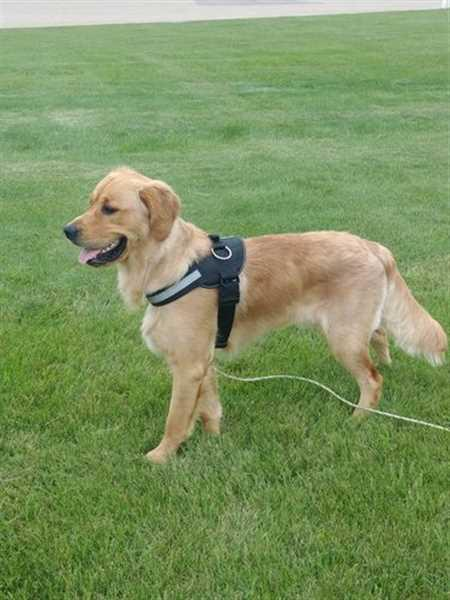 Laura & Jason L. verified customer review of Discount Harness