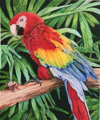 Ann Kullberg Mark Menendez: Jungle Macaw Colored Pencil Tutorial Review