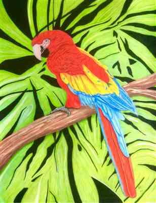 Paul H. verified customer review of Mark Menendez: Jungle Macaw Colored Pencil Tutorial