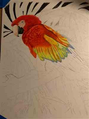 Janell S. verified customer review of Mark Menendez: Jungle Macaw Colored Pencil Tutorial