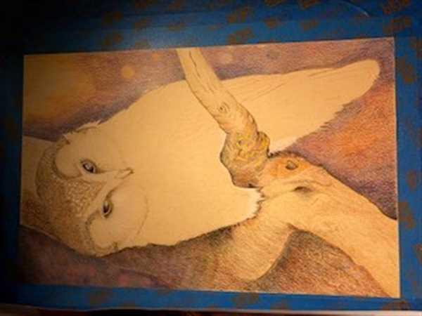 Lynne Forgette verified customer review of Owl: In-Depth Colored Pencil Tutorial