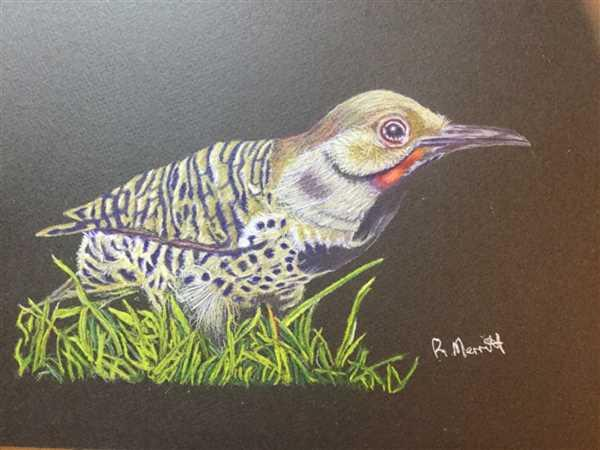 Roy Merritt verified customer review of Woodpecker: In-Depth Colored Pencil Tutorial
