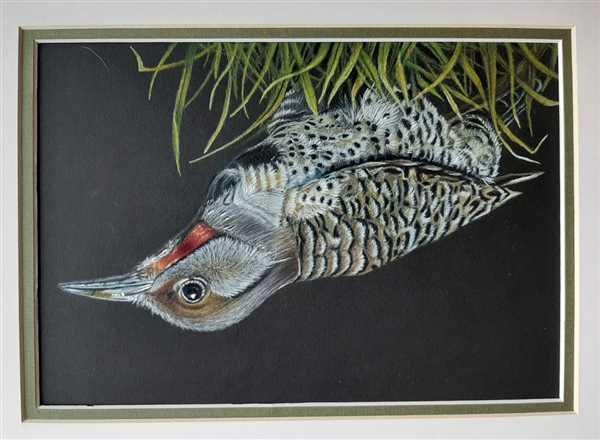 Ann Fogg verified customer review of Woodpecker: In-Depth Colored Pencil Tutorial