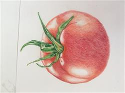 Connie A. verified customer review of Jumpstart Level 1: Ripe Tomato in Colored Pencil