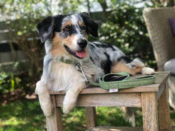 My McDawg Green Herringbone Dog Collars and leads | Posh Paws Review