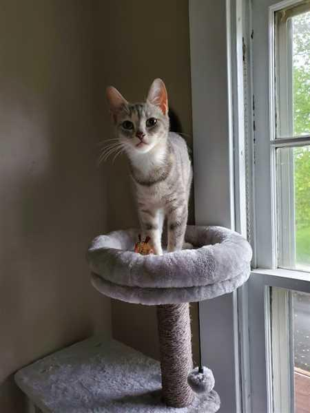 BASTET 57-in Modern Cat Tree & Condo Review