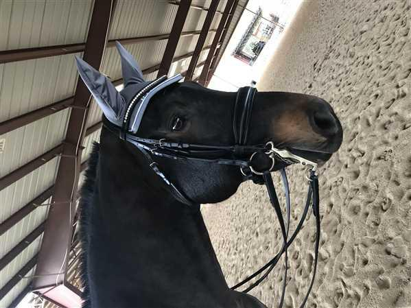 Shannon verified customer review of Schockemohle Copenhagen Drop Noseband Classic Line Bridle