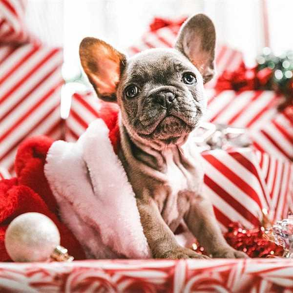 Simone verified customer review of Christmas Eve - Merry Christmas, Christmas Presets, Instagram Presets, Blogger Presets