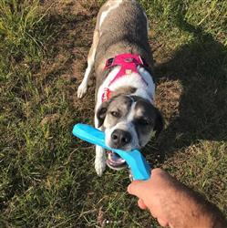 Leika @LeikasDogLife verified customer review of Gnawt-a-Stick® Azul Juguete para Perros p/Aventar de Ruffwear®