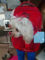 Melissa M. verified customer review of Mochila Backpack para Cargar a tu Perro Roja - Kurgo®