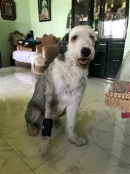LAURA C. verified customer review of Muñequera Para Perro - Walkin' Wrist Hugger de Handicapped Pets