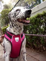 Diana G. verified customer review of Pechera Ventilada V2 de Canine Friendly Frambuesa - Vented Vest Harness V2