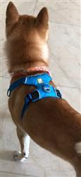 Dolores O. verified customer review of Correa para Perros Front Range™ Leash Gris de Ruffwear
