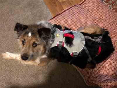 Kristen W. verified customer review of Doubleback™ Harness