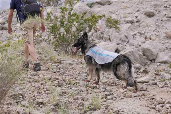 Heidi verified customer review of Swamp Cooler™ Cooling Vest