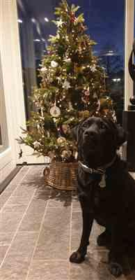 Stacey Van Baast verified customer review of  Kerstfoto's maken met je hond