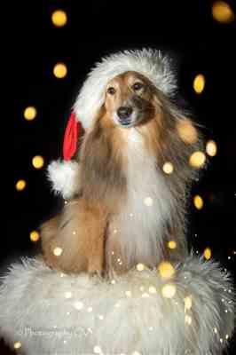 Cynthia Verbruggen verified customer review of  Kerstfoto's maken met je hond