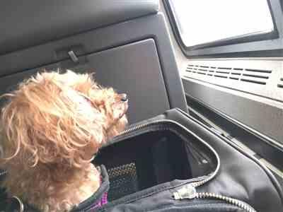 Alice L. verified customer review of The Pet Carrier