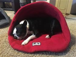 Joshua H. verified customer review of Dog Slipper Bed