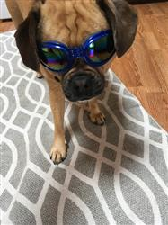 Andrea H. verified customer review of Dog Sun Glasses