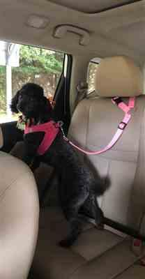 Catherine Williams verified customer review of Colorful Dog Seat Belt
