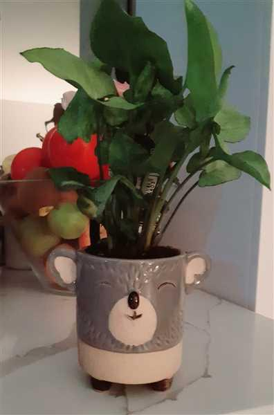 The Chic Nest Little Koala Planter Review