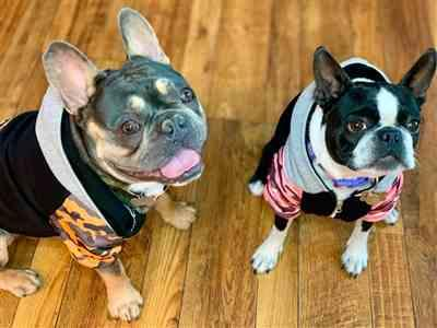 Jennifer Juarez verified customer review of French Bulldog hoodie | Frenchie Clothing | Pink Ultimate Camo