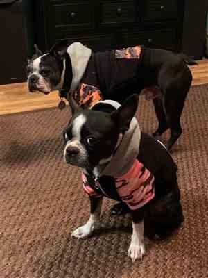 Anonymous verified customer review of French Bulldog hoodie | Frenchie Clothing | Pink Ultimate Camo