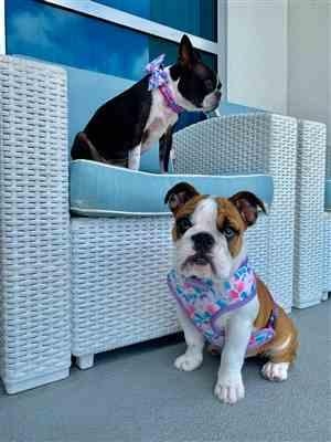 Laurie M. ha verificato la recensione del cliente del collare per cani Breakaway Frenchiestore | Mermazing