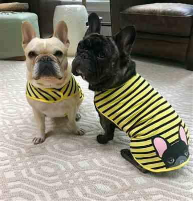 Terri S. verified customer review of Frenchie Shirt | Frenchiestore | Cream French Bulldog in Bumblebee