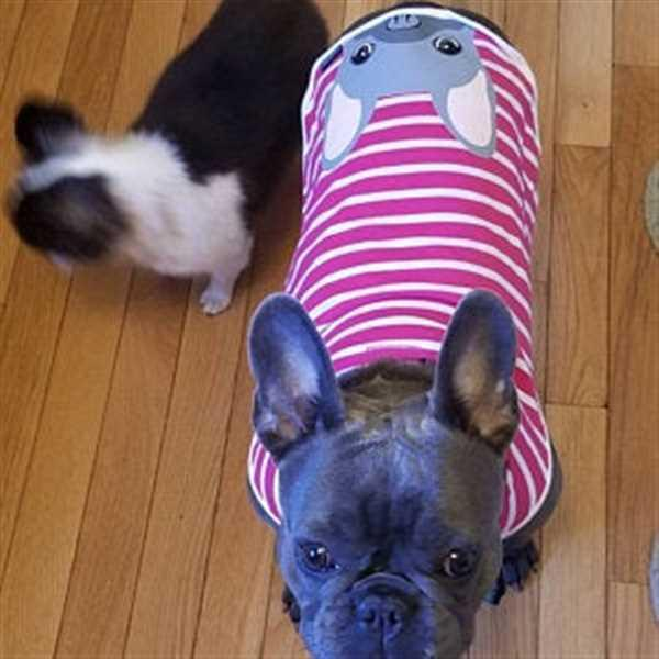 Frenchiestore Frenchie Shirt | Frenchiestore | Blue French Bulldog in Bubble Gum Review